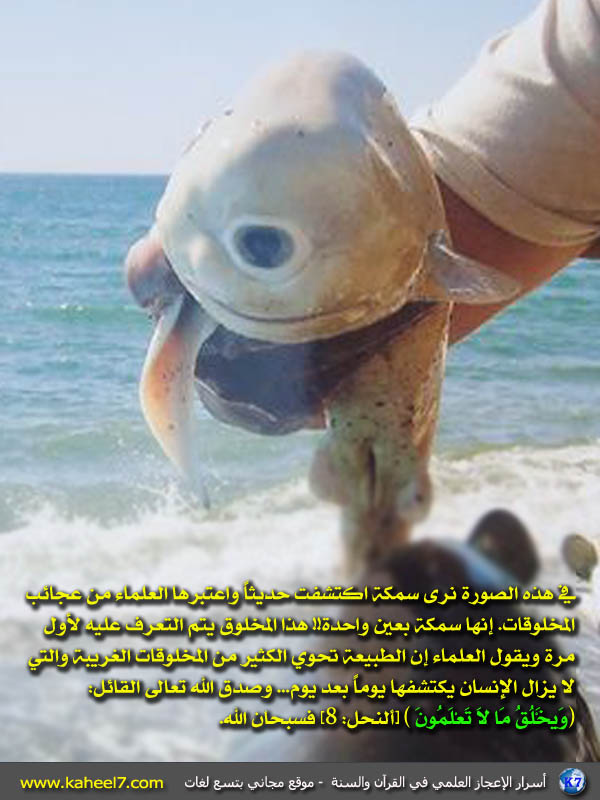 سمكة بعين واحدة Fish-one-eye