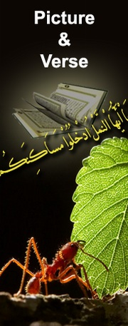 The Secrets of the Qur'an's Miracles, Website of AbdulDaem Al-Kaheel